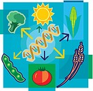 Montage illustration about genetically modified food containing DNA, sun, vegetables and wheat
