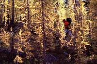 A woman hiking through an autumn forest near Washington Pass WA