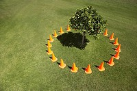 Traffic cones surrounding tree in field
