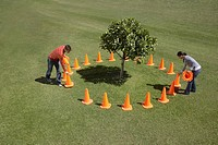Couple placing traffic cones around tree