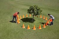Couple placing traffic cones around tree