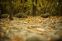 Leaves scattered in forest