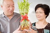Close_up of a mature couple holding bamboo shoots