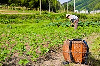 Side profile of a person working in a field, Emerald Valley, Huangshan, Anhui Province, China