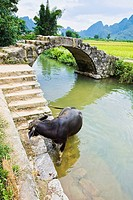 High angle view of a cow tied at the riverbank, Yangshuo, Guangxi Province, China