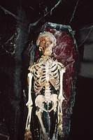 England _ London _ Southwark district _ human skeleton in London Dungeon