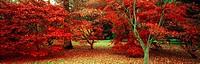 Westonbirt Arboretum, Gloucestershire, UK