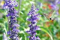 insect on purple flowers