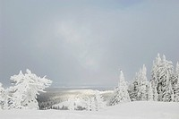 Trees in a snow covered landscape, West Yellowstone, Gallatin County, Montana, USA