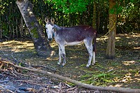 Side profile of a donkey tied with a tree