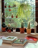 different cacti at window