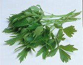 Lovage / Levisticum officinale