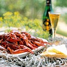 Crayfish party _ crayfishes, dill flower and schnaps