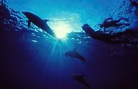 snorkling with dolfins