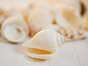 Closeup of seashell