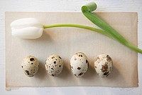 Still life of tulip and speckled eggs