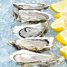 Oysters served on ice, close_up