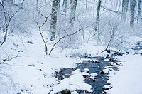 Trees and stream covered in snow