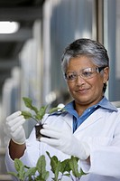 African scientist examining seedlings in factory
