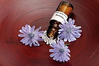 Bottle with Bach Flower Stock Remedy, Chicory Cichorium intybus, elevated view