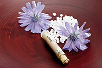 Tube with Bach Flower Stock Remedy, Chicory Cichorium intybus