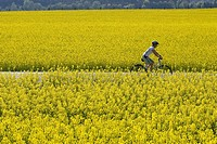 Germany, Bavaria, Oberland, Woman mountain biking across rape field