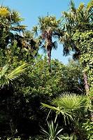 Italy, SouthTyrol, Meran, Palm trees