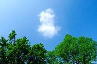 Die Wolke 1