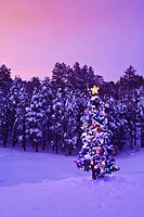Decorated & lit Christmas tree in a spruce forest in Tres Piedras, Carson National Forest, New Mexico