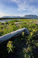 Yak Peak and river mouth at Kaguyak along the coast of Katmai National Park, Alaska