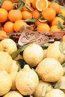 orangen, große sorrentinische zitronen