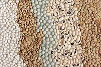 Brown Lentils, White Beans, Peas, Black_eyed Peas, Lens esculenta, Phaseolus vulgaris, Pisum sativum, Vigna unguiculata, Lentil, White Bean, Pea, Blac...