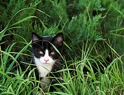A black and white kitten outdoors in the grass