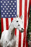 A fake horse in front of an American flag on King Street in Old Town, Alexandria, Virginia, USA