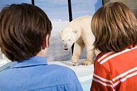 Boys looking at polar bears in a museum