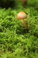 Mushroom on moss, Fungi