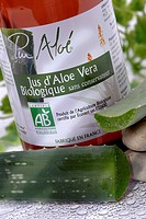 Aloe vera is a perennial plant without stem, with remarkable qualities. In the green parts we gather the clear pulp that looks like gel and that has c...