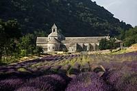 France  Provence  Vaucluse, Senanque Abbey  Lavender field