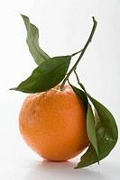 Orange with stalk and leaves