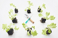 still life of lettuce seedlings with syringe and shovel