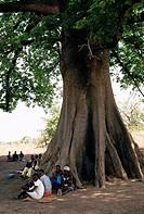 Burkina Faso, Ceiba tree