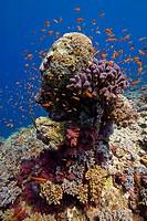 Coral reef scene Suakin Sudan