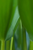 Lush green foliage growing, close-up