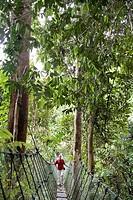 Jungle trail in Batang Ai National Park, Sarawak, Borneo, Malaysia, Southeast Asia
