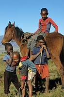 Horse Equus spp _ Drakensberg, Drakensbergen, Malealea, Lesotho, Africa