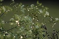 Grass _ Germany, Europe