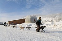 Yukon Quest Sled Dog Race, caretaker guiding dog team, Dawson City, Yukon Territory, Canada, North America