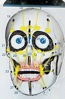 Humanoid robot skull, Diagram of a robot skull that will form the base of a robot Albert Einstein head created by US robot designer David Hanson. The ...