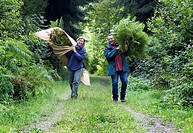 Employees of a company producing natural remedies with freshly collected bracken fern for the production of remedies, Alsace, France, Europe
