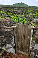 Vineyards, Pico Island, Azores, Portugal